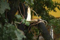 Три района Алтайского края пострадали от сильного урагана