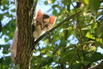 Бийчанин убил котенка на глазах у детей